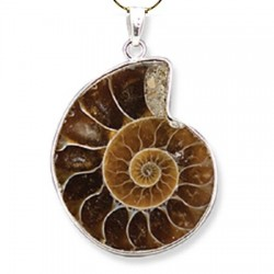ammonite-pendant