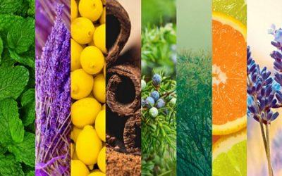 Essential Oils for Reiki
