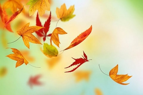 Remedies for Autumn Dryness