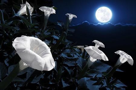 A Garden In the Night: Ideas for a Moon Garden
