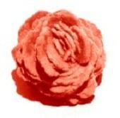 bar_rose