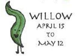 clt-tree-5-willow