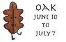 clt-tree-7-oak