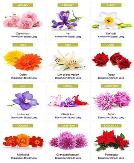 Flower Power: The Color of Flowers