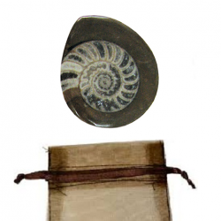 ammonite-fossil-rw