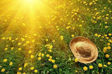 Summer Herbal Medicine Chest