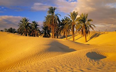 Desert Melodies: An Oasis of Musicalities