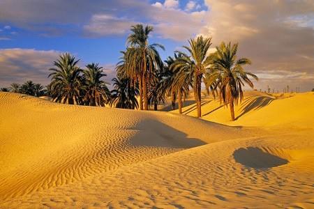 Desert Melodies: An Oasis of Musicalities