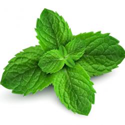 peppermint-plant