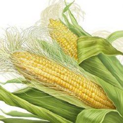 corn-silk-weight