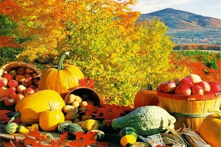 Fall Harvest Bounty