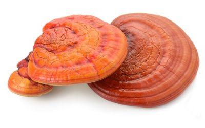 Reishi: The Real Magic Mushrooms