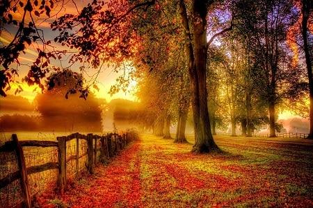 Autumn's Seasonal Turn