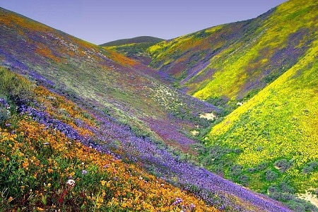 India's Valley of the Flowers
